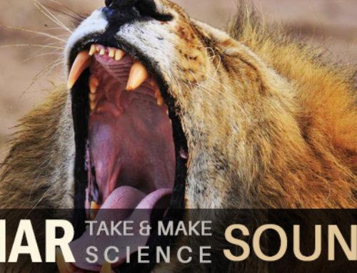 Sensory Sensations: Sound